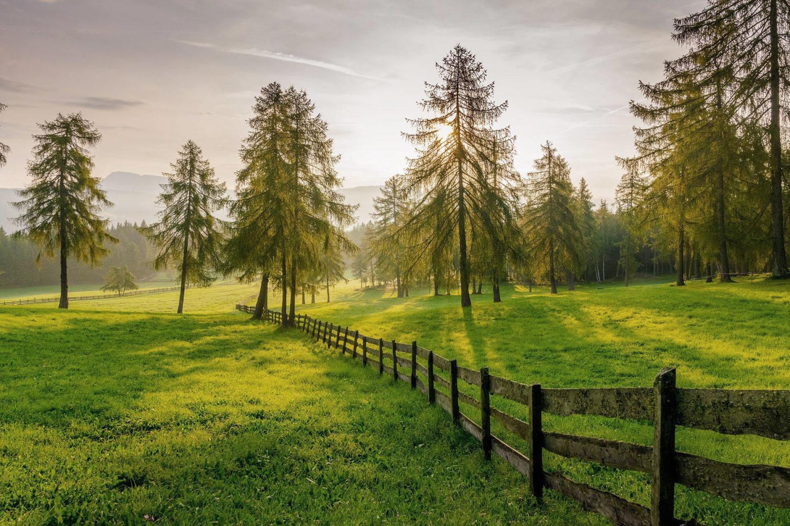 Naturparadies - Prati di larici